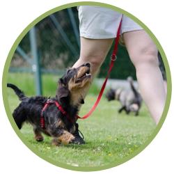 Hundeschule Cool Dude Training