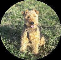 Hundeschule Sabine
